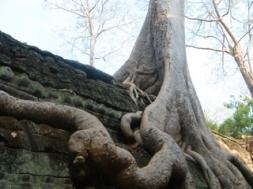 ruines-d-angkor-cambodge